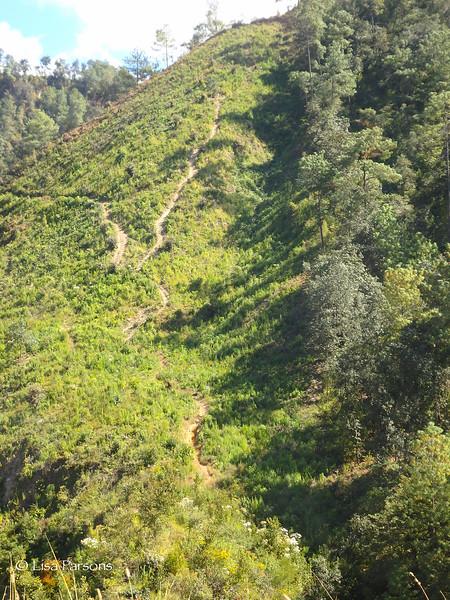 Guatemalan Single Track