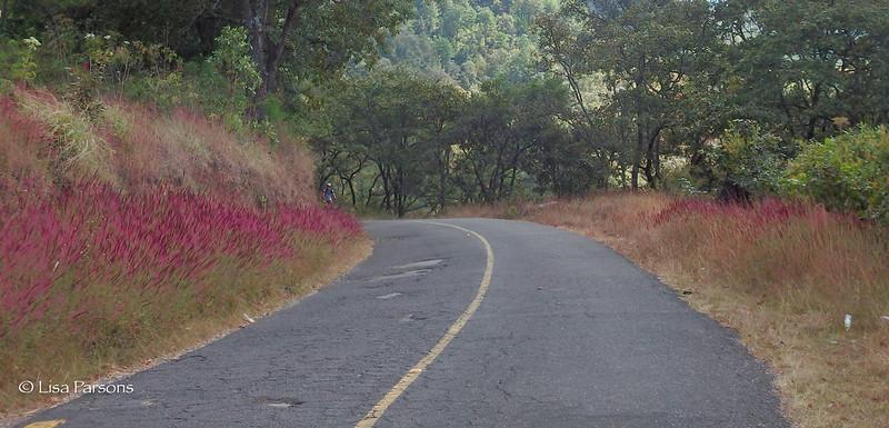 Road Side Color