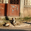Another Roadside Dog