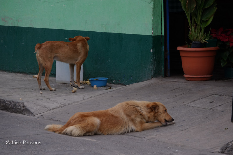 The Local Dogs