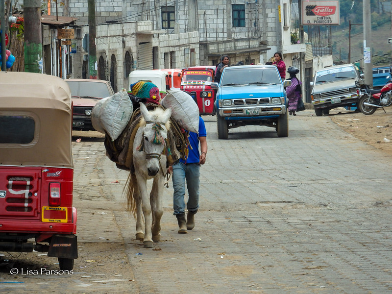 Transporting Goods by Horse