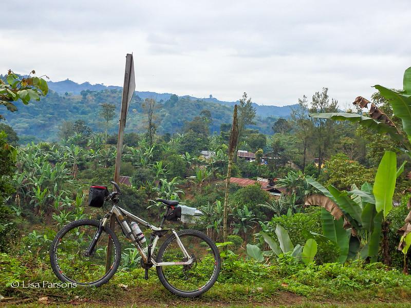 Jungle Town
