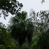 Tower Shrouded in Mist Above the Jungle