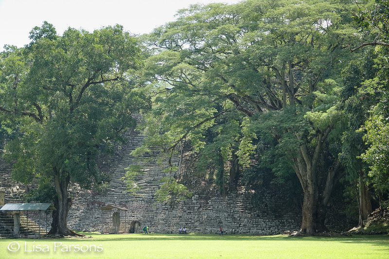 Ruins with Large Trees
