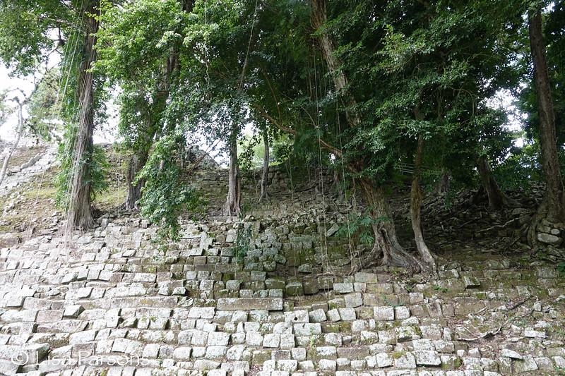 Vines, Trees, and Stones