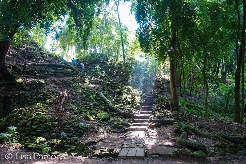 Walk Along the Mayan Forest Ruins