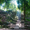 Walk Along the Mayan Forest Ruins