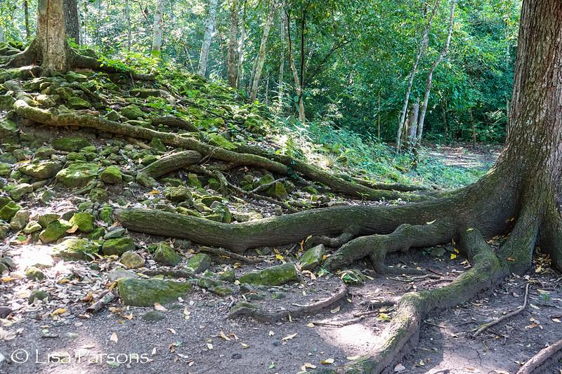 Twisting Roots
