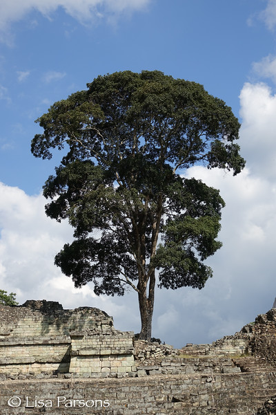 Standing Tree Atop the Ruins