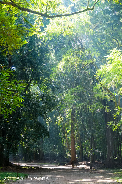 Mayan Forest Walkway