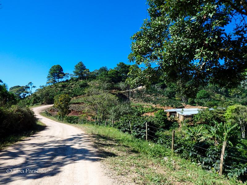 Road Skirting a Plantation