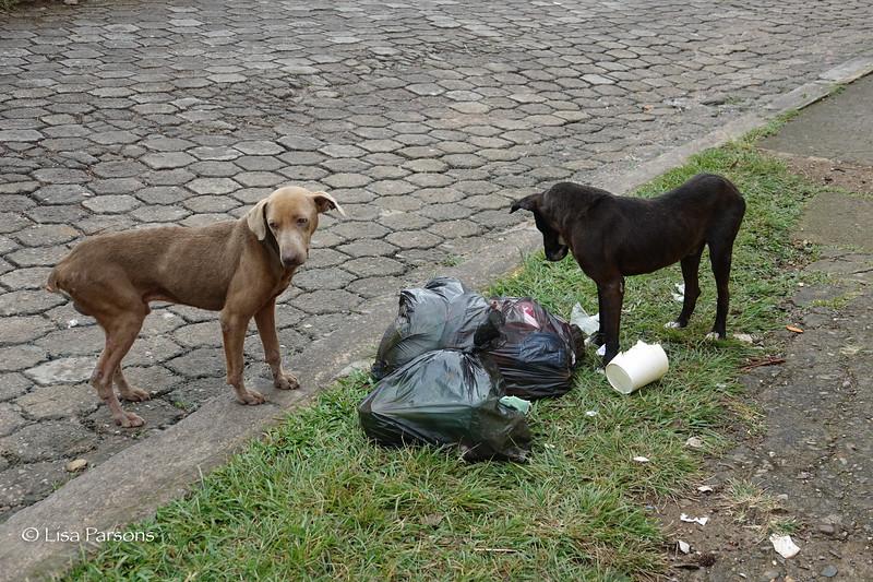 Free Range Garbage Dogs