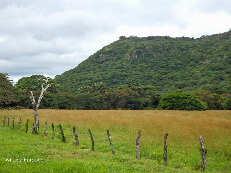 Tawny Grass Fields