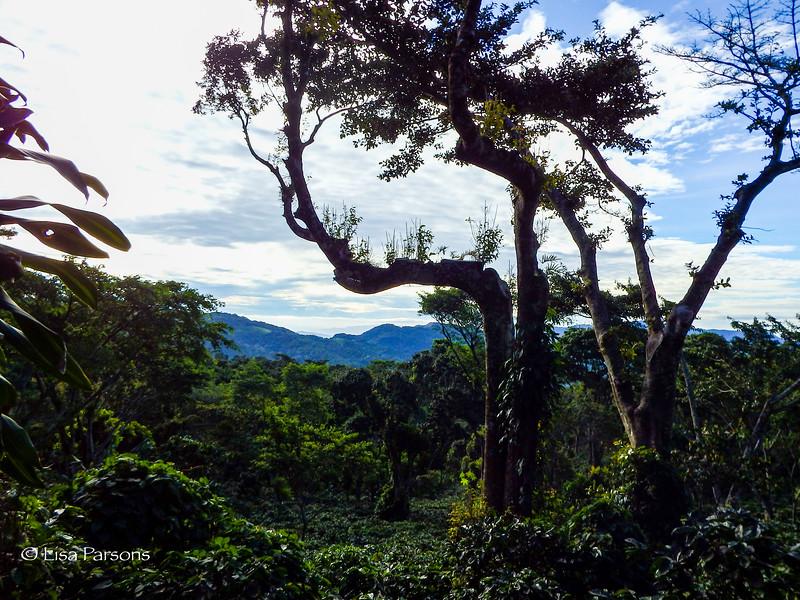 Plantation Views