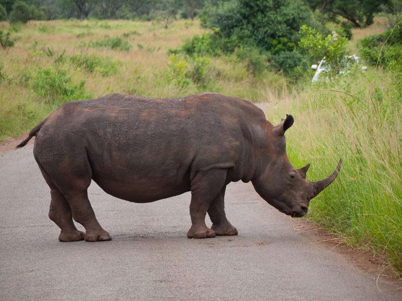Rhinoceros in the Hluhluwe Umfolozi Game Reserve - Zululand