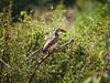 Hookbill in Chobe National Park
