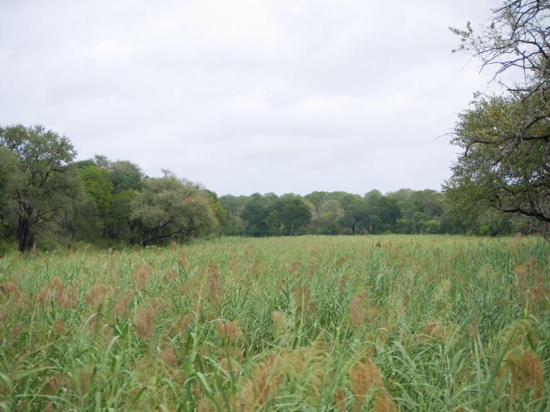 Open field area in Kruger National Park