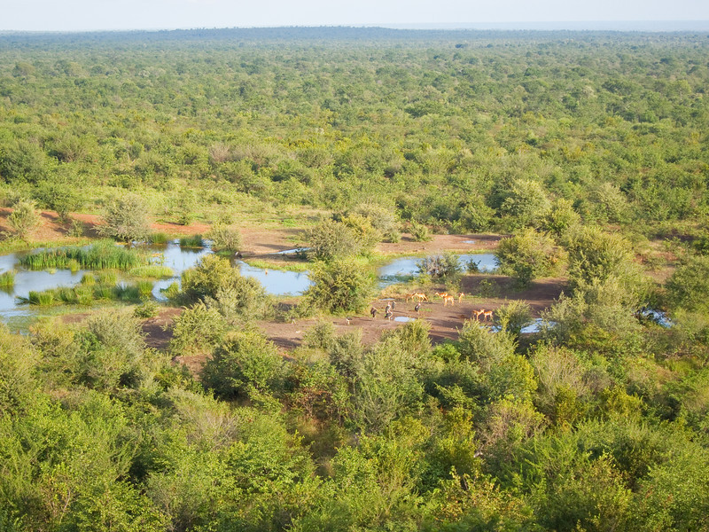 The watering hole seen from the Victoria Falls Safari Lodge