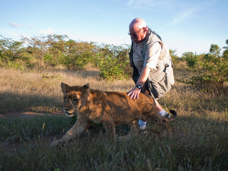 The Walking with Lions Experience