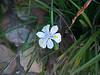 A flower at the Kirstenbosch Botanical Gardens
