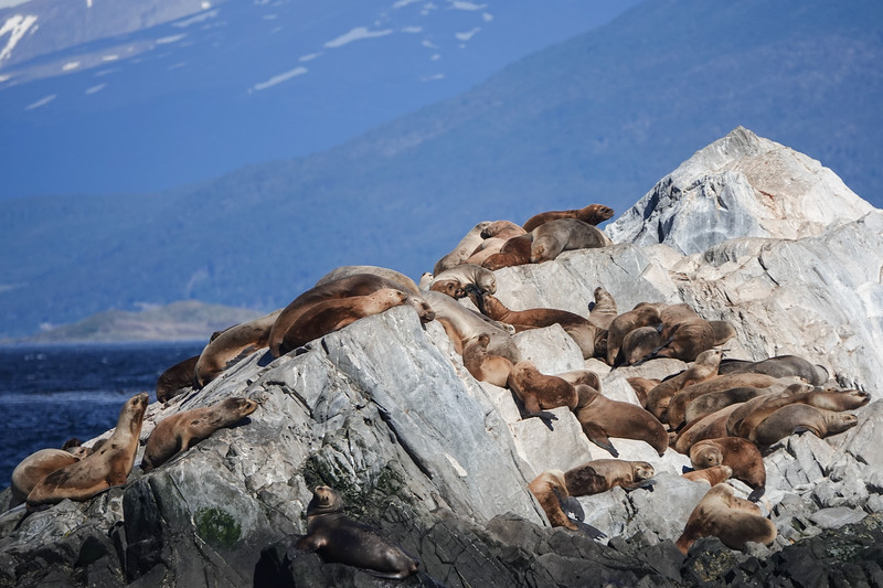Sea Lion rock in the Beagle Channel, outside Ushuaia, Argentina.