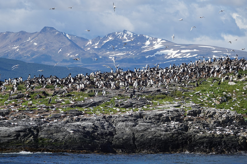 More of the Martillo Islands outside Ushuaia, Argentina, and their colony of Magellanic Penguins.