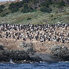 The Martillo Islands outside Ushuaia, Argentina, and their colony of Magellanic Penguins.