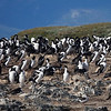 More colonies of  Magellanic Penguins on the Martillo Islands in the Beagle Channel,  outside Ushuaia, Argentina.