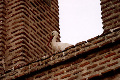 One the famous storks - Avila, Spain ... March 2003 ... Photo by Rob Page III