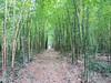 At the Bamboo Plantation