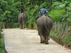 Elephants at Ban Ruammitr (the Karen Village)