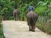 Elephants at Ban Ruammitr (the Karen Village)