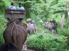 Trail ride at Maesa Elephant Camp