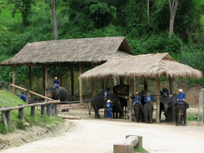 Staging area for the show at the Maesa Elephant Camp