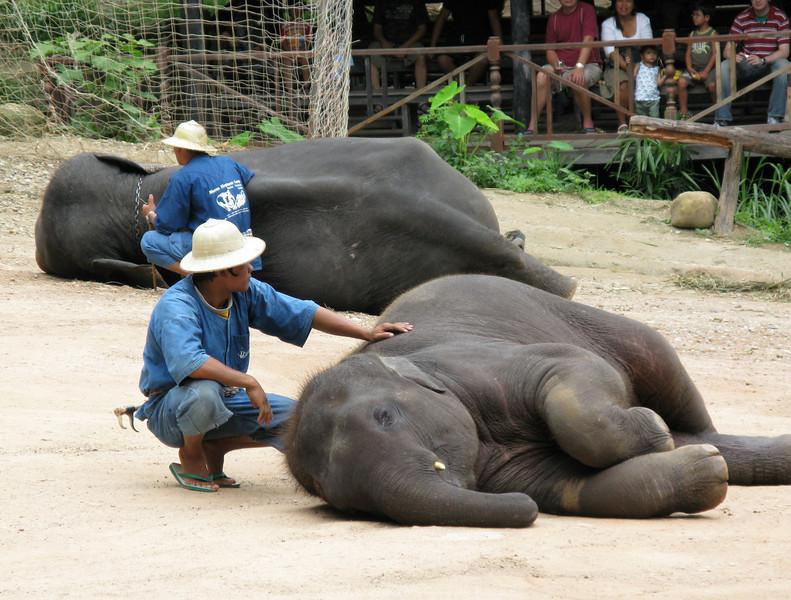 Elephant show .......