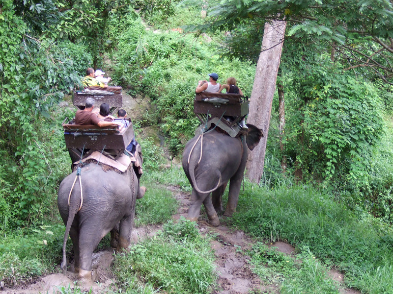 Trail ride at the Maesa Elephant Camp