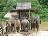 Elephant rides at the Maekok River