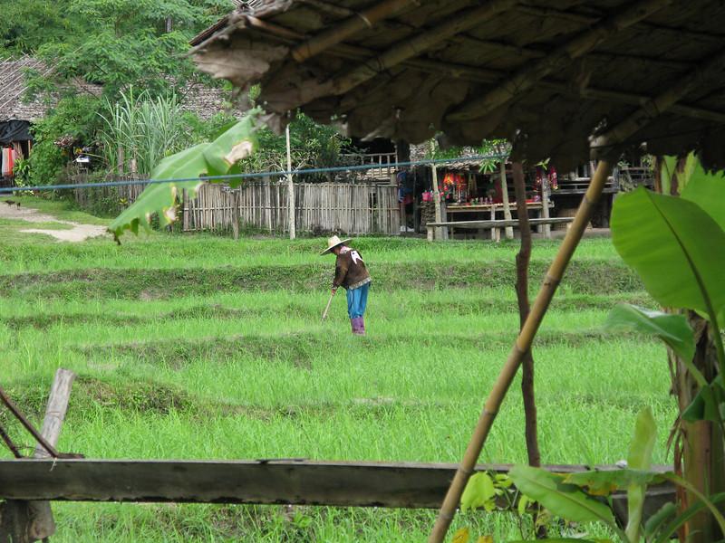 Tribe member tending the Rice Fields