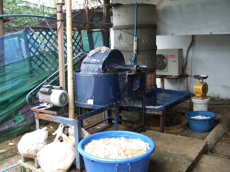 Equipment to process the Mulberry bark