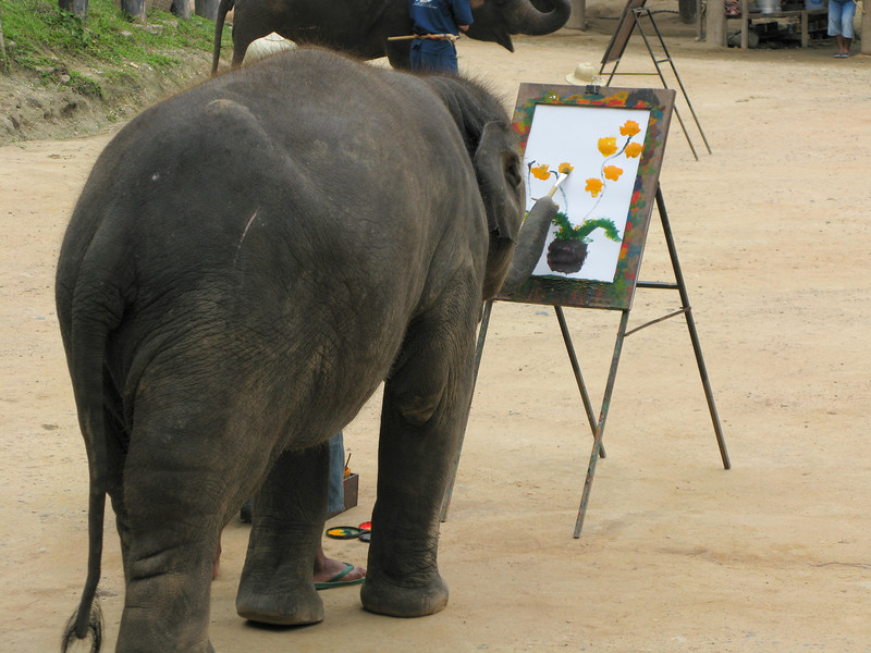 Elephant painting at the Maesa Elephant Camp