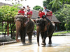 Elephant rides at the Cultural Center
