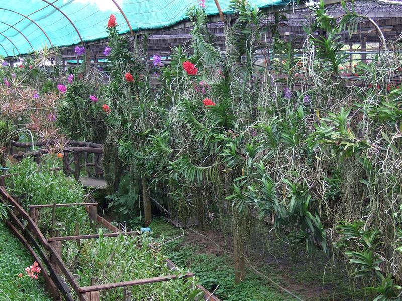 Sai Nam Pring Orchid Farm