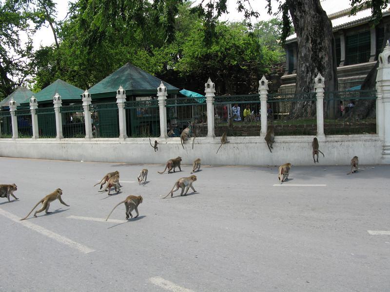 Wat Pra Prang Sam Yot (Monkey Town)