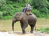 Elephant handler at the Maekok River