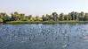 The Viking Sineus herding ducks on the Dneiper River on the way to Kherson, Ukraine.