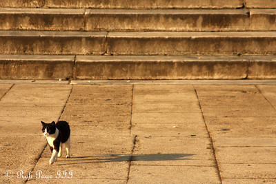 A cat at the Sultan Ahmed Mosque (Blue Mosque) - Istanbul, Turkey ... March 12, 2011 ... Photo by Rob Page III