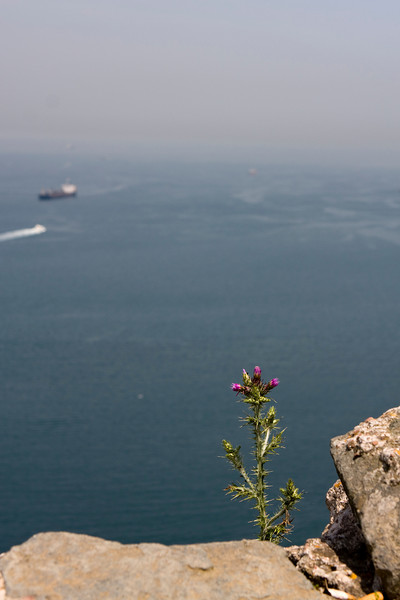View of the Bosphorous leading into the Black Sea