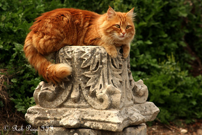 A cat - Ephesus, Turkey ... March 5, 2011 ... Photo by Rob Page III