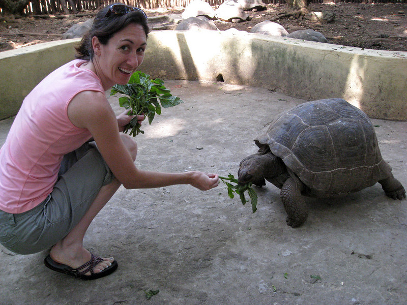 There is a tortoise sanctuary on the island.
