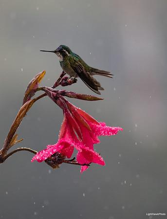 2019 Costa Rica